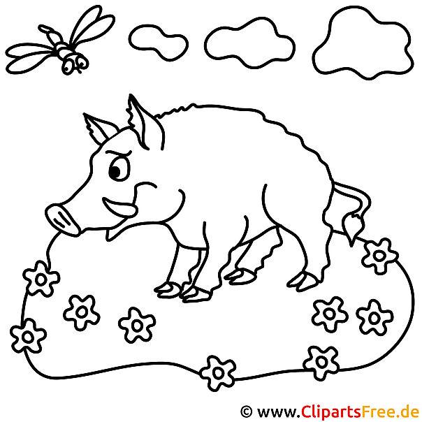 Wildschwein Bild zum Ausmalen, Malvorlage