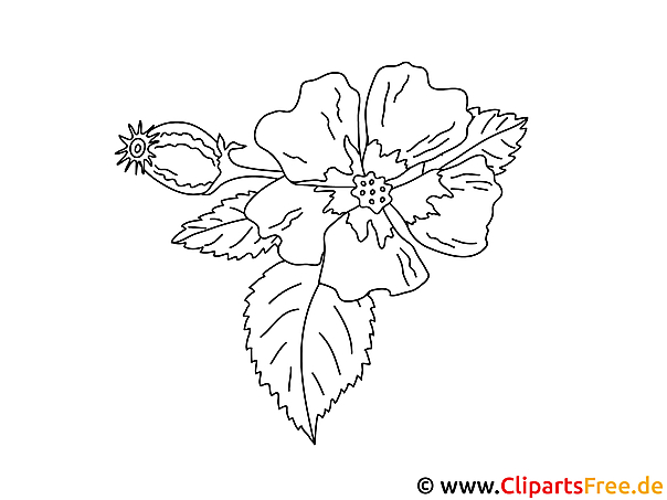 Einfache Malvorlage Blume