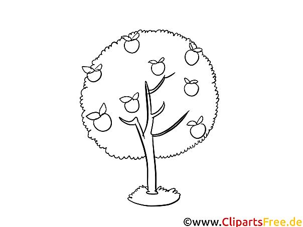 apfelbaum zum ausmalen - malvorlagen für kinder