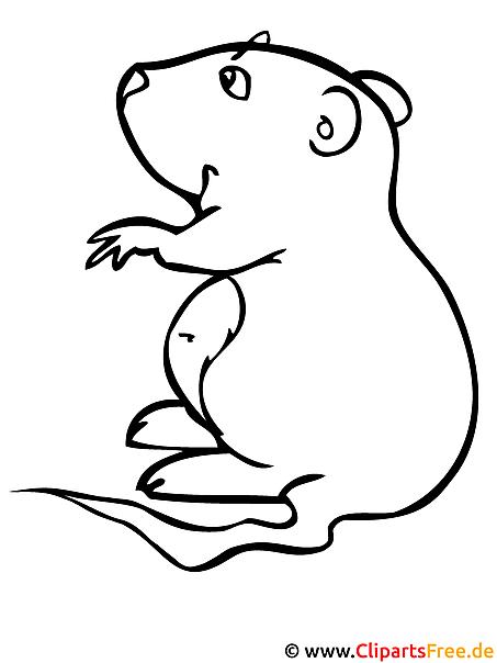 hamster  kinder malvorlagen gratis