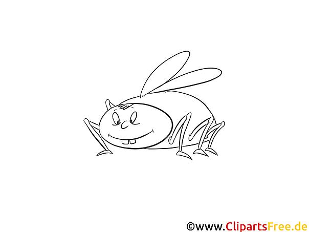 malvorlage käfer kostenlos