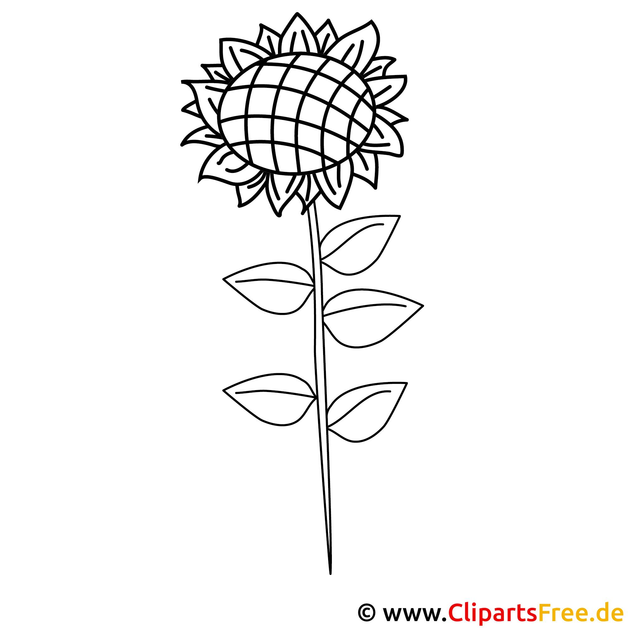 Sonnenblume Bild zum Ausmalen, Malvorlage