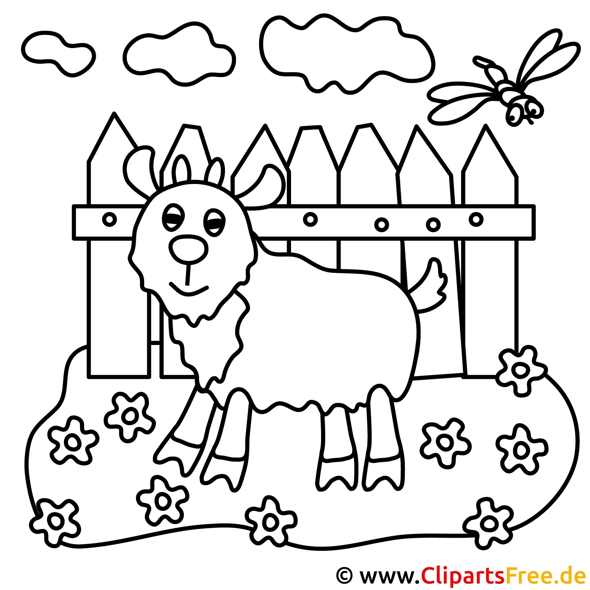 Vieh Bild zum Ausmalen, Malvorlage