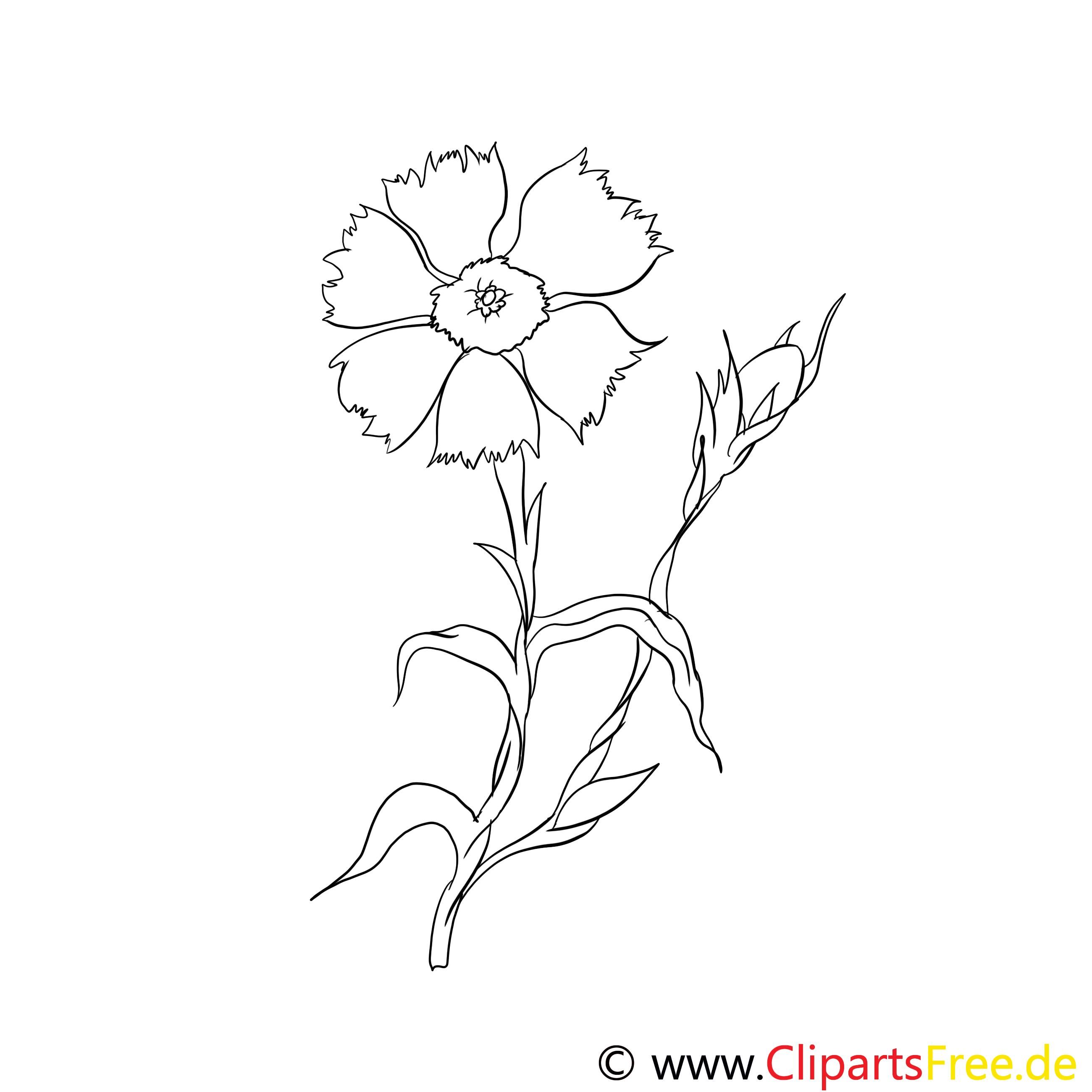 Blume Zyane Malvorlage