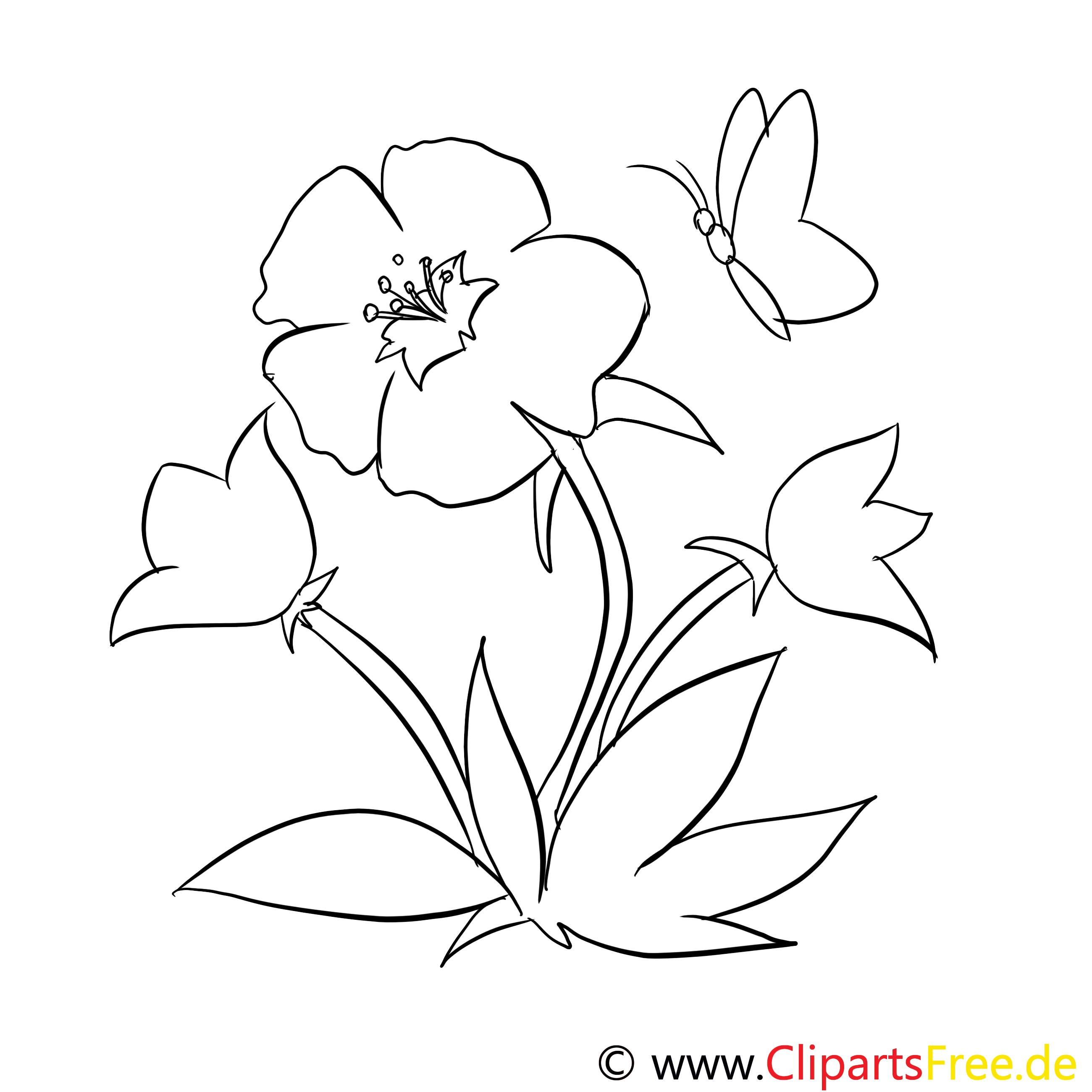 Eibisch und Schmetterling Malvorlage kostenlos