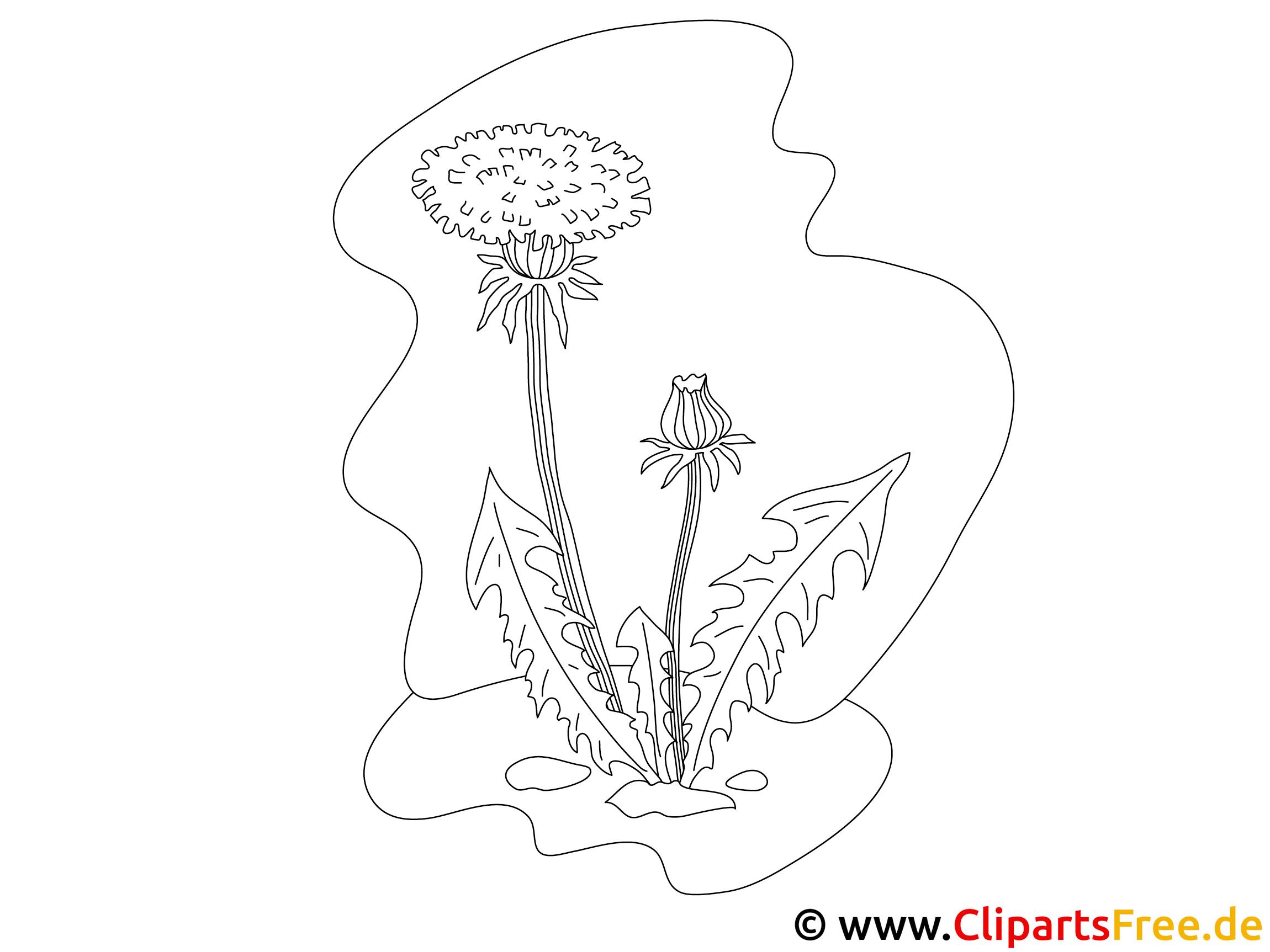 Loewenzahn -Ausmalbilder Blumen