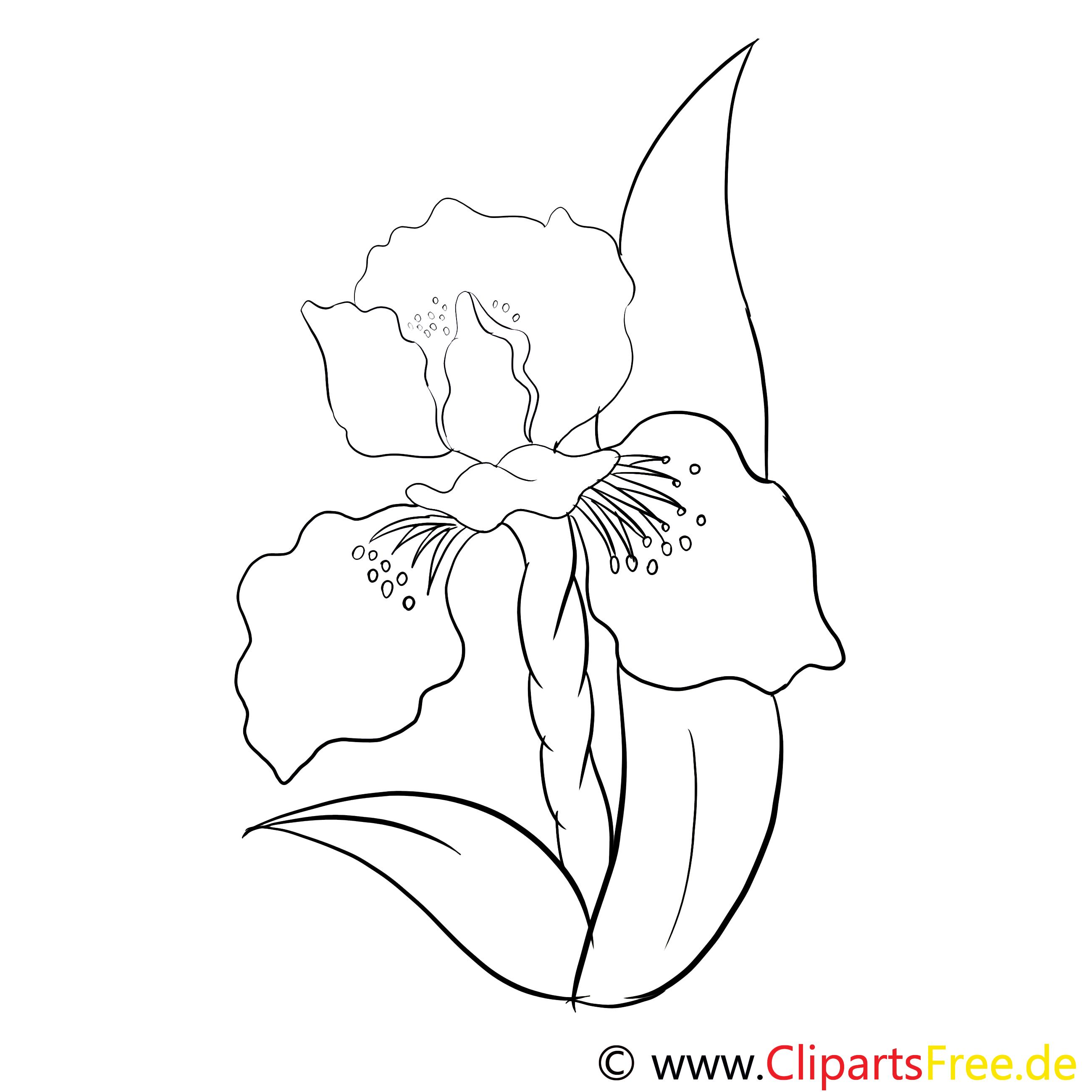 Malvorlage Blume zum Ausmalen