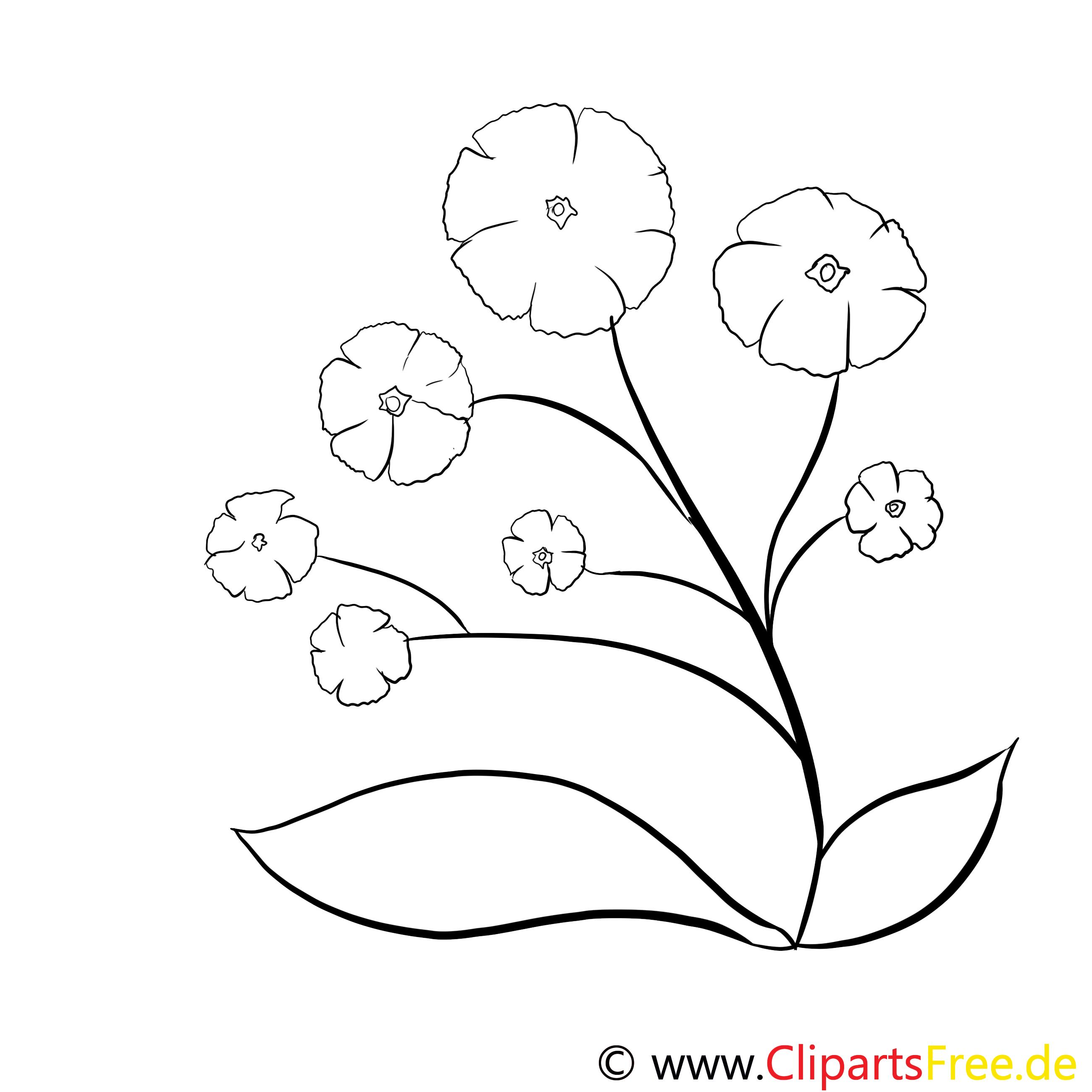 WIlde Blumen zum Drucken und Ausmalen