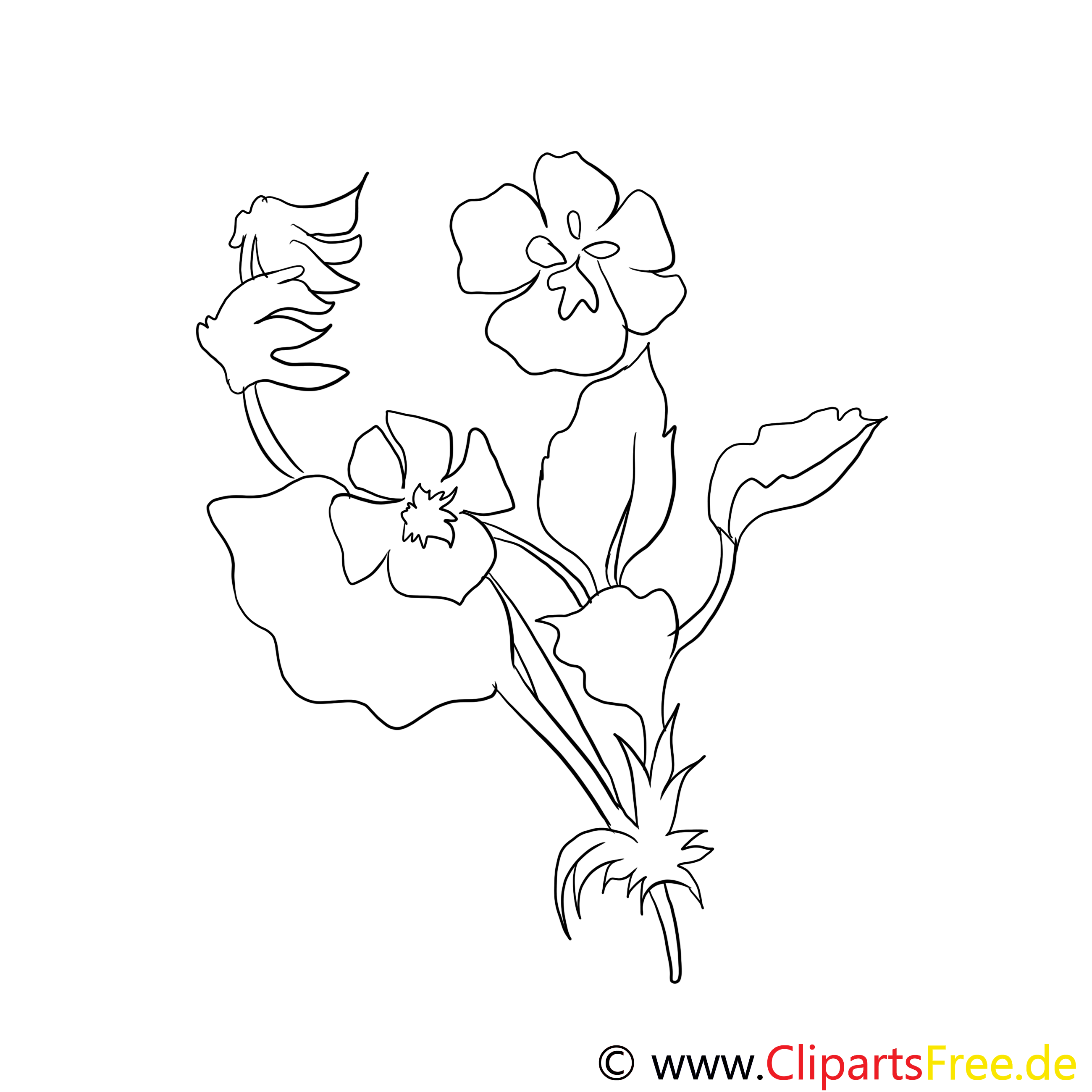 Wildes Stiefmütterchen Bild schwarz-weiß zum Ausmalen