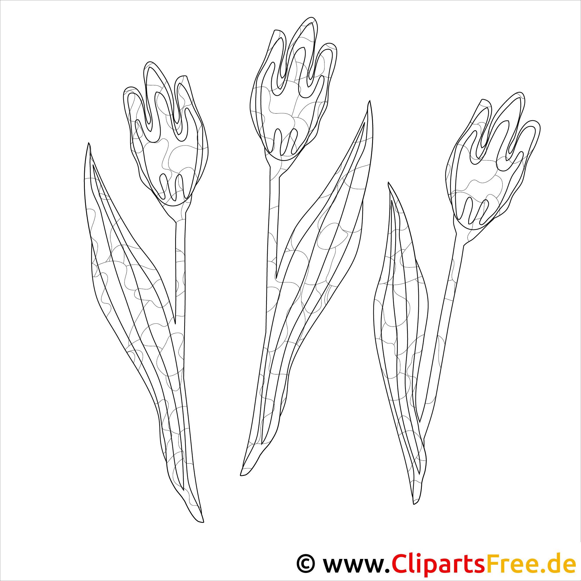 tulpen malvorlage