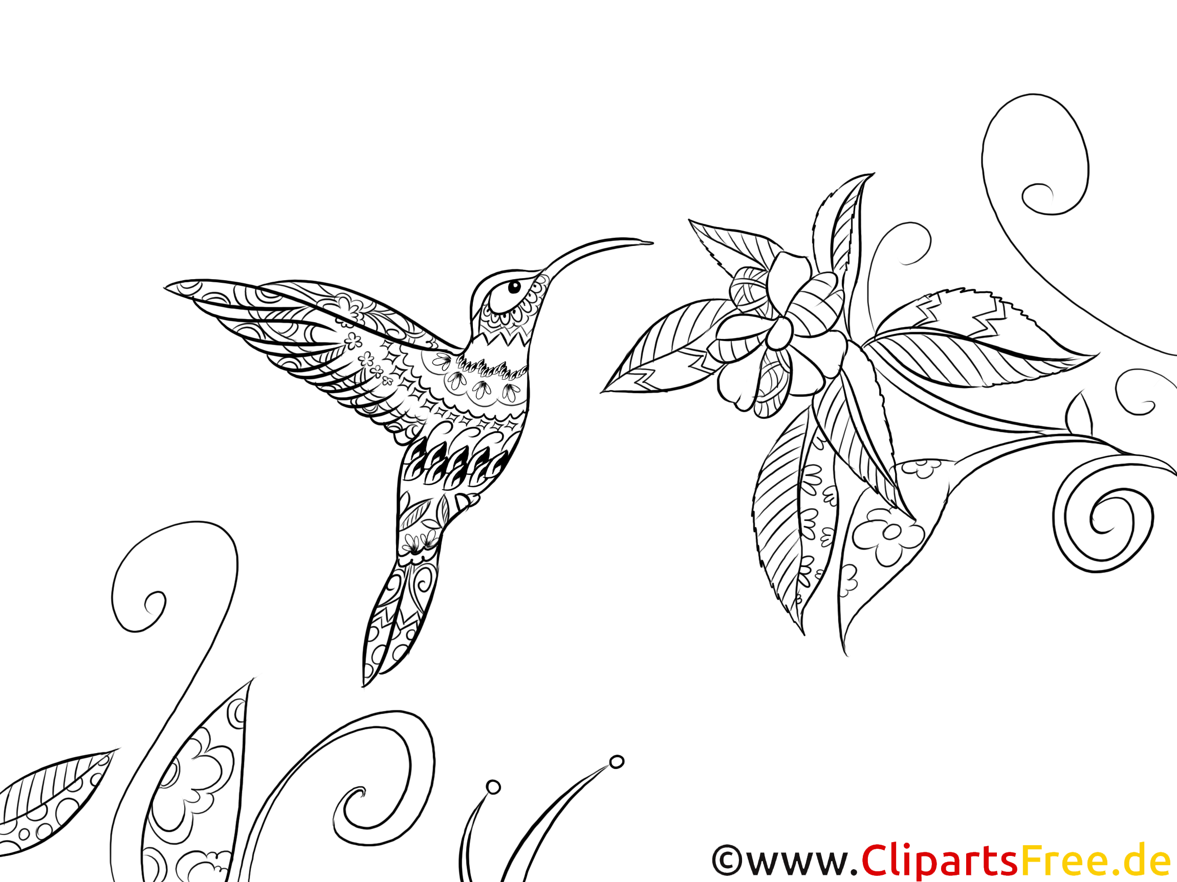 Ausmalbild für Erwachsene Vogel, Fauna