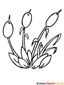 Pflanzen Malvorlagen